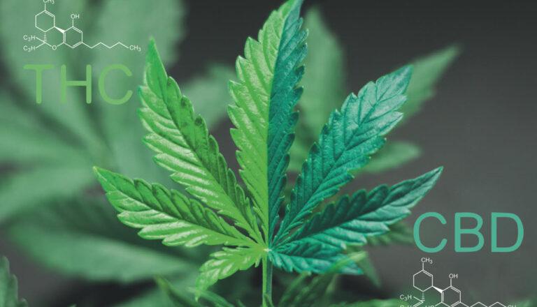 Cannabis e uso terapeutico